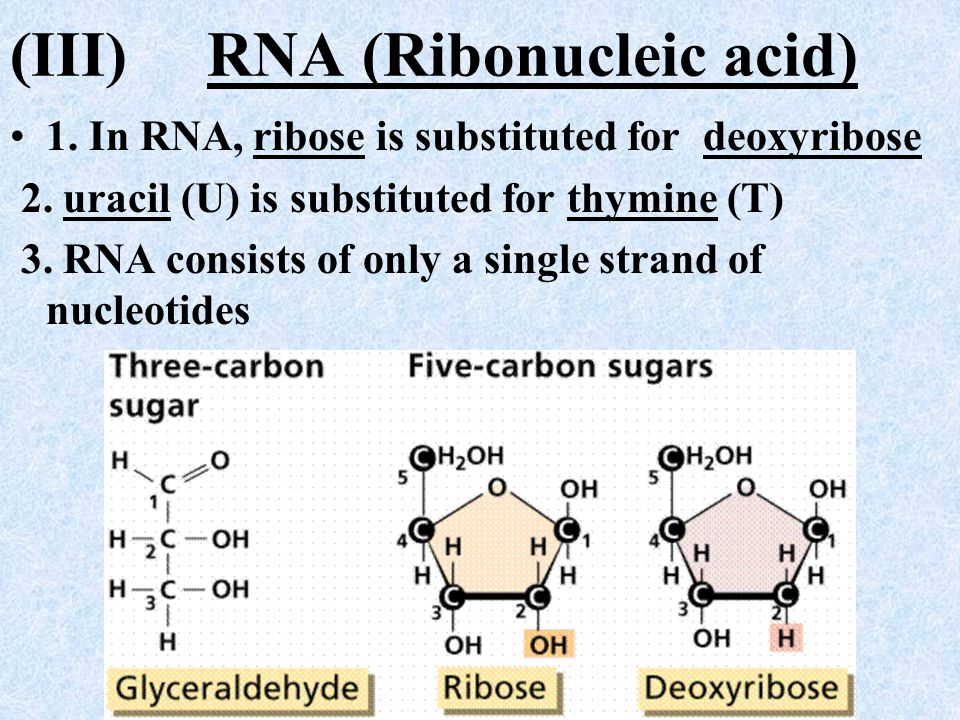 RNA Nucleotide A RNA nucleotide is composed of three parts: 1. A phosphate group 2. A ribose (5-carbon sugar) molecule 3. A nitrogenous base of either