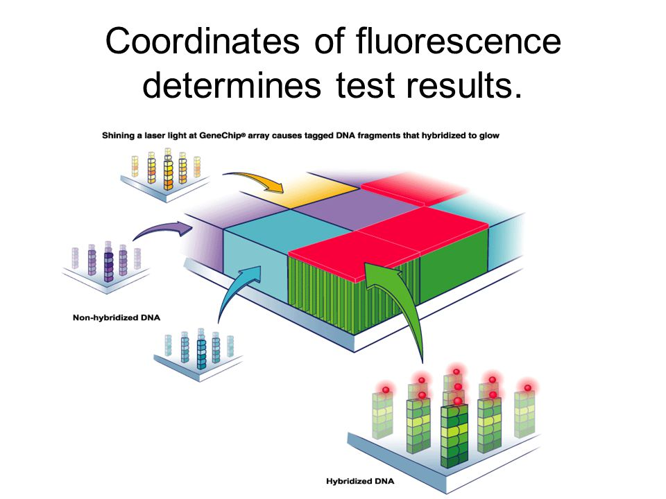 Coordinates of fluorescence determines test results.
