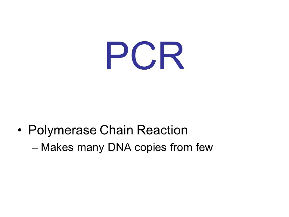 PCR Polymerase Chain Reaction –Makes many DNA copies from few