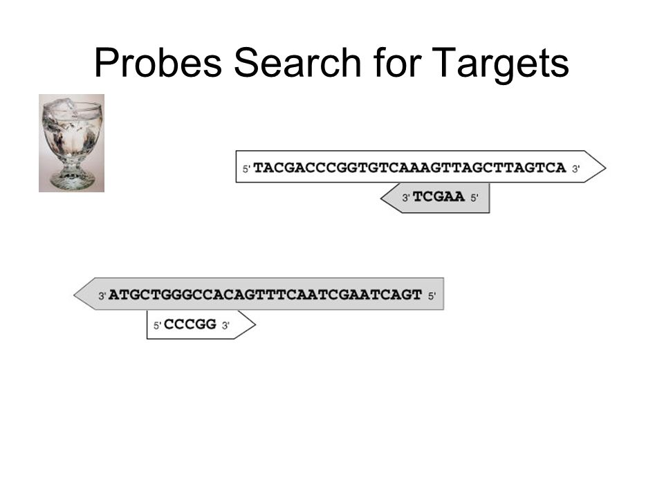 Probes Search for Targets