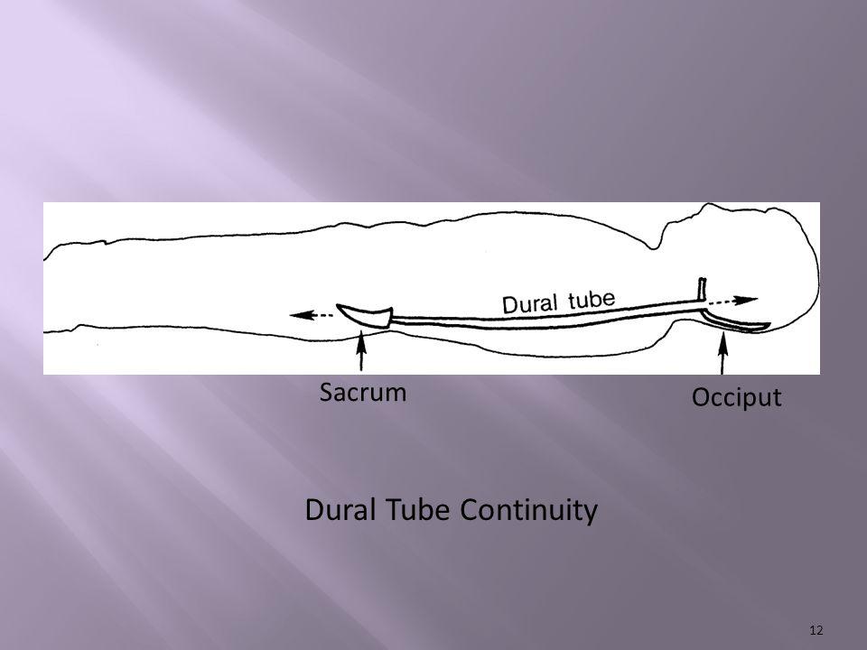 Dural Tube Continuity Sacrum Occiput 12