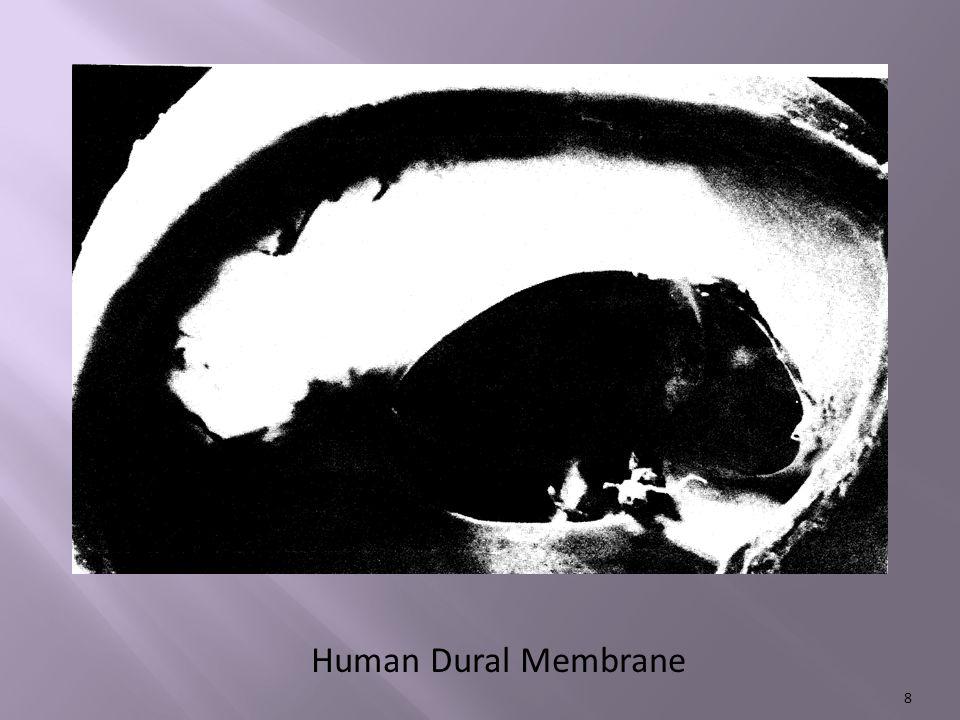 Human Dural Membrane 8
