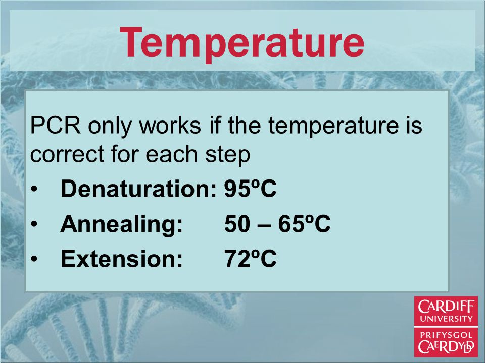 Temperature PCR only works if the temperature is correct for each step Denaturation:95ºC Annealing:50 – 65ºC Extension: 72ºC