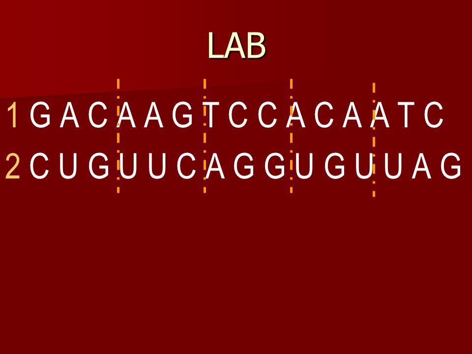 1. UCA  AGT 2. GAU  CTA 3. CUA  GAT 4. GCA  CGT Answers