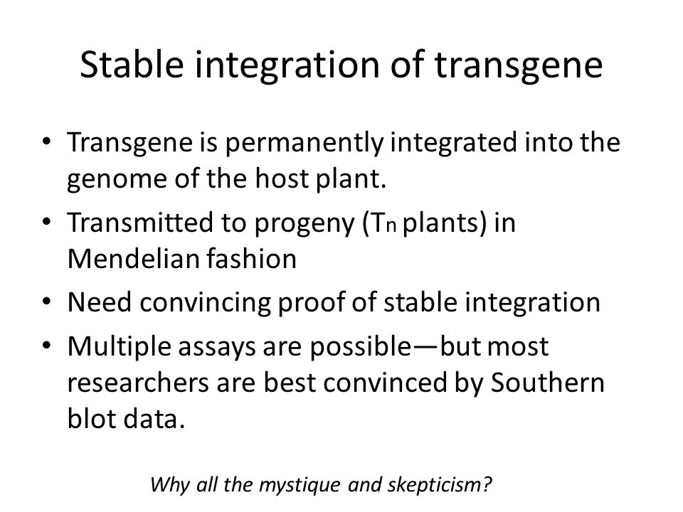 Stable integration of transgene Transgene is permanently integrated into the genome of the host plant. Transmitted to progeny (T n plants) in Mendelia