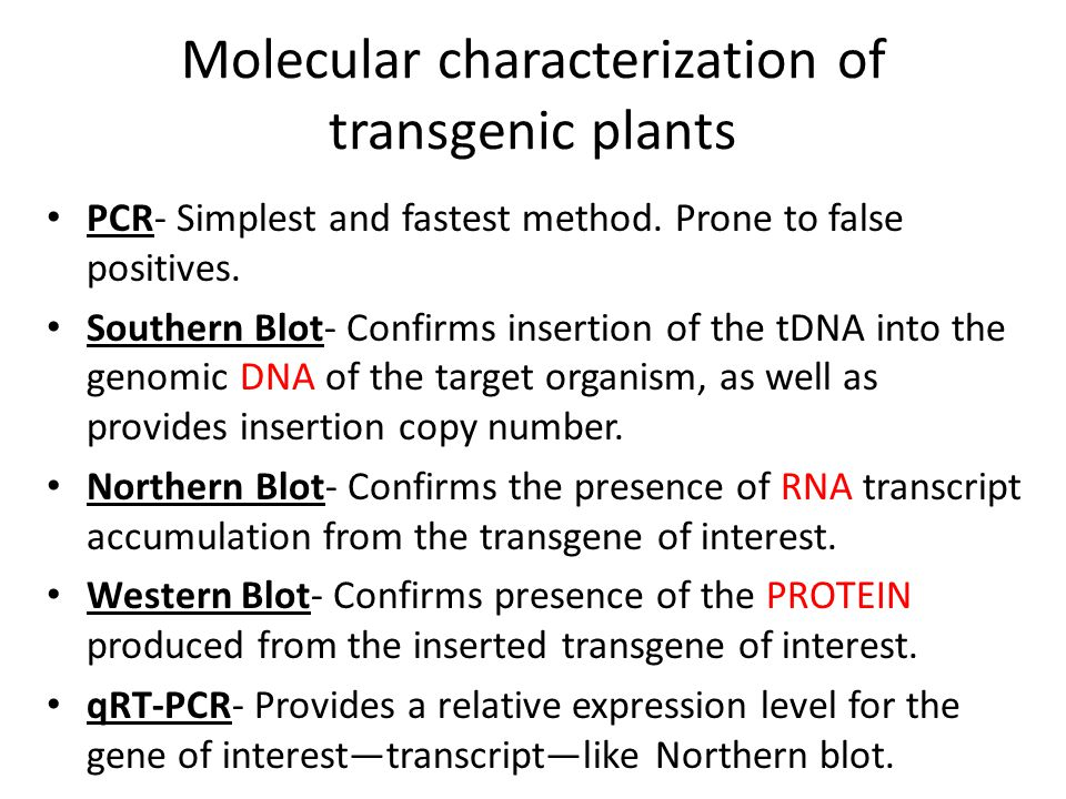 Molecular characterization of transgenic plants PCR- Simplest and fastest method. Prone to false positives. Southern Blot- Confirms insertion of the t