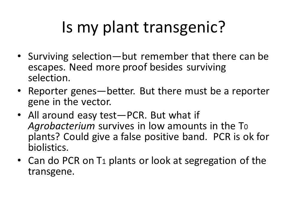 Is my plant transgenic? Surviving selection—but remember that there can be escapes. Need more proof besides surviving selection. Reporter genes—better
