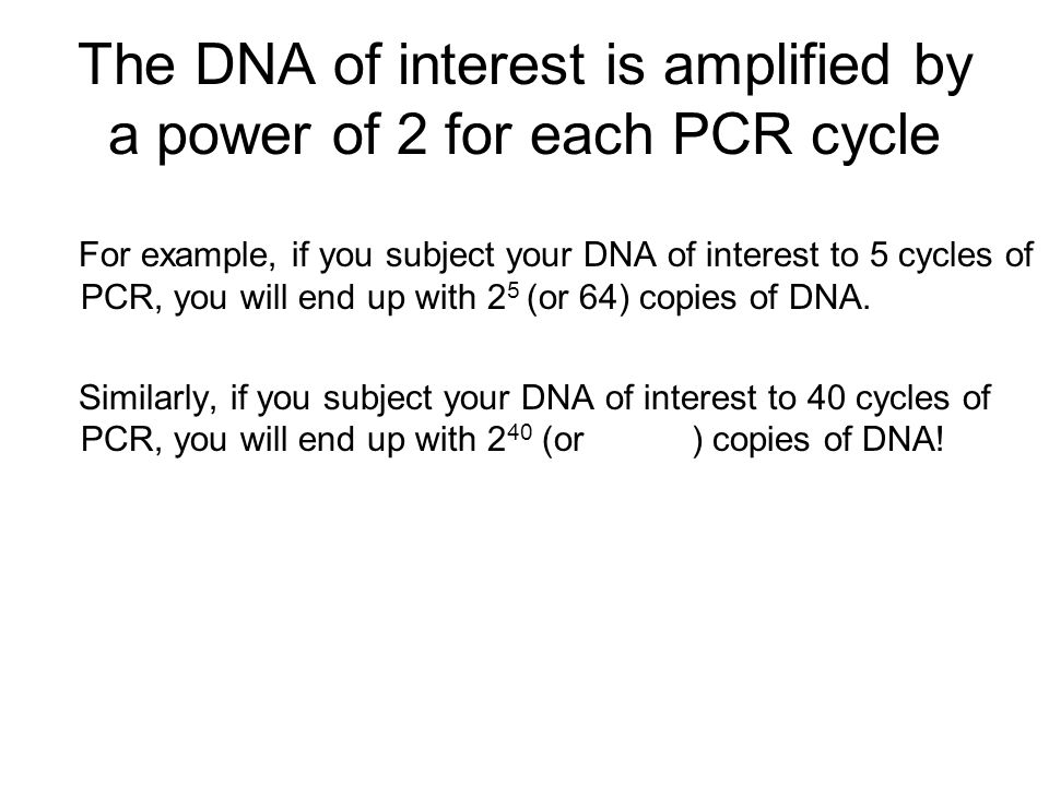 The DNA of interest is amplified by a power of 2 for each PCR cycle For example, if you subject your DNA of interest to 5 cycles of PCR, you will end