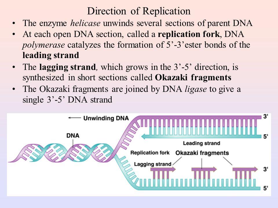 Semi-Conservative DNA Replication