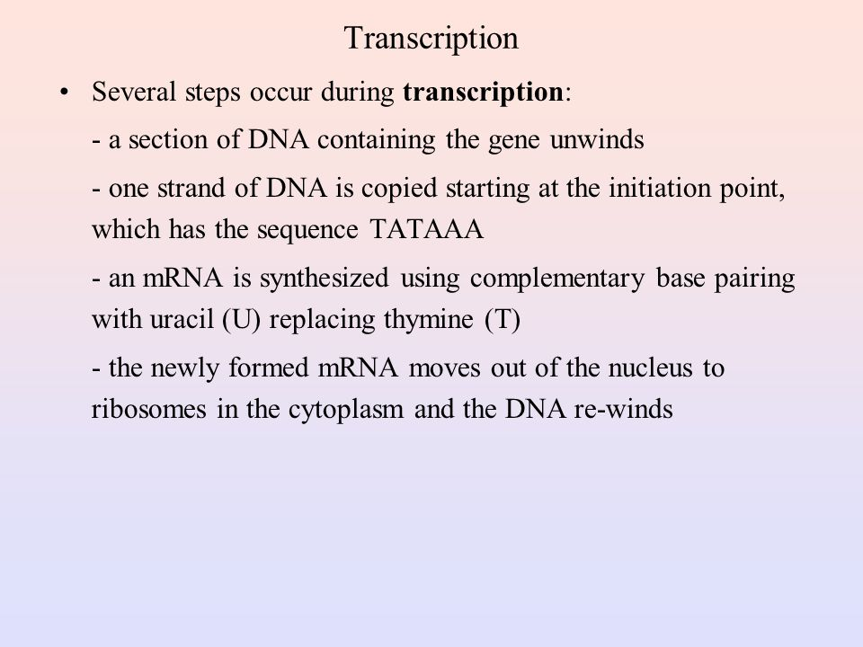 Protein Synthesis The two main processes involved in protein synthesis are - the formation of mRNA from DNA (transcription) - the conversion by tRNA to protein at the ribosome (translation) Transcription takes place in the nucleus, while translation takes place in the cytoplasm Genetic information is transcribed to form mRNA much the same way it is replicated during cell division