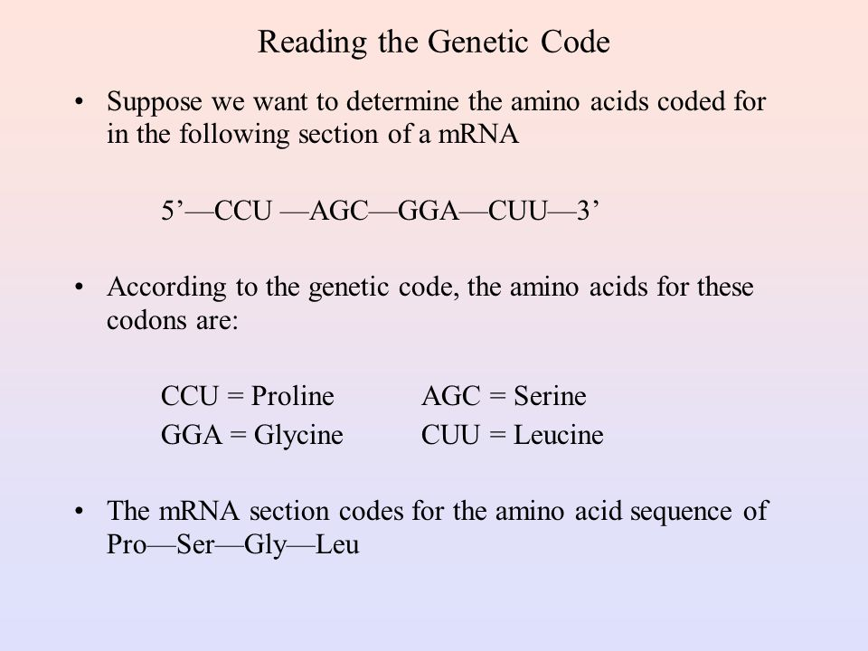 mRNA Codons and Associated Amino Acids