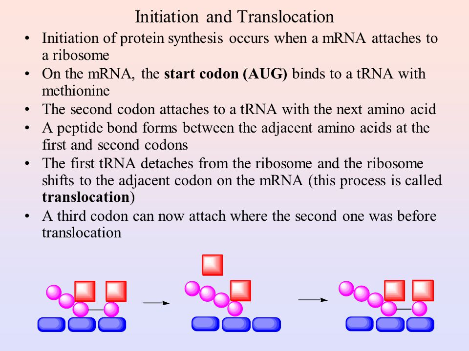 Translation and tRNA Activation Once the DNA has been transcribed to mRNA, the codons must be tranlated to the amino acid sequence of the protein The first step in translation is activation of the tRNA Each tRNA has a triplet called an anticodon that complements a codon on mRNA A synthetase uses ATP hydrolysis to attach an amino acid to a specific tRNA