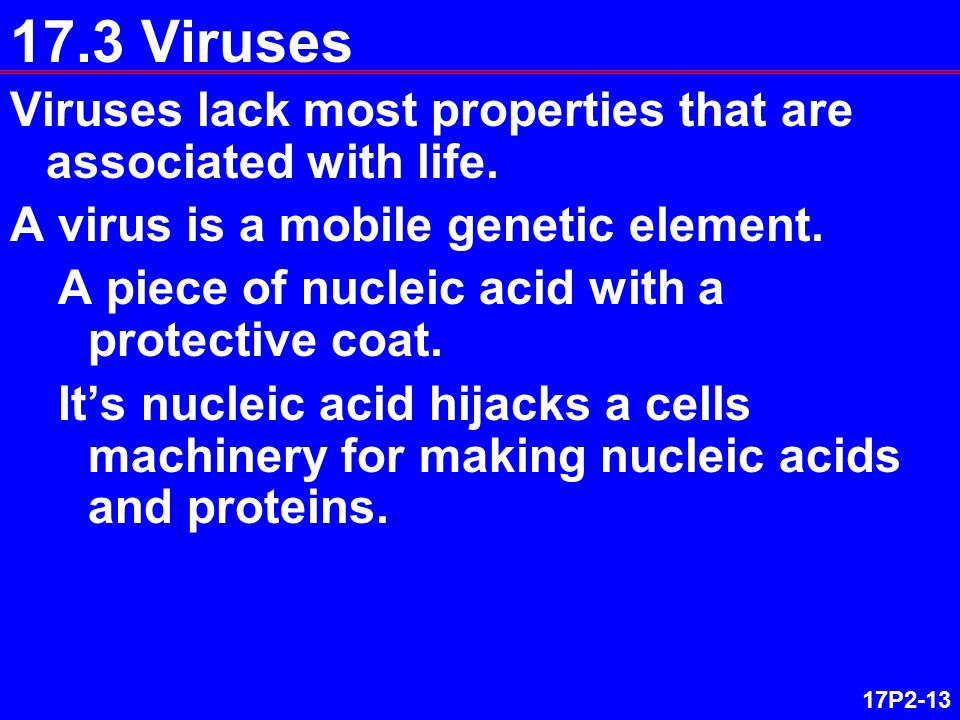 17P2-13 17.3 Viruses Viruses lack most properties that are associated with life. A virus is a mobile genetic element. A piece of nucleic acid with a p