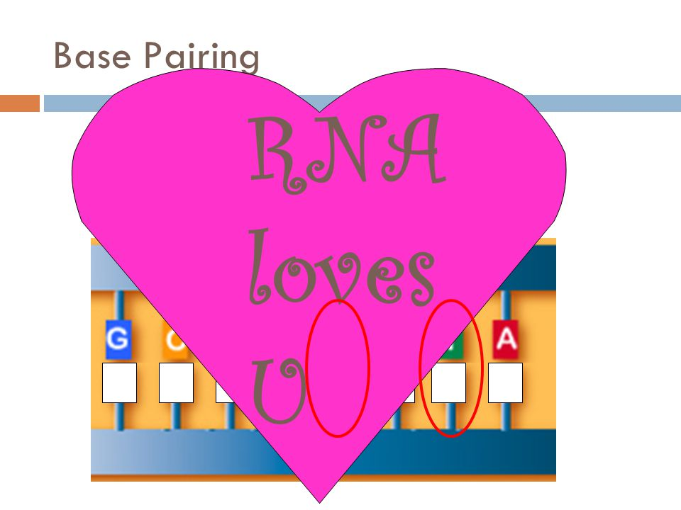 Base Pairing RNA loves U