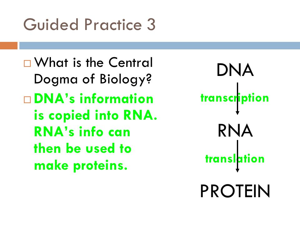 Guided Practice 3  What is the Central Dogma of Biology.