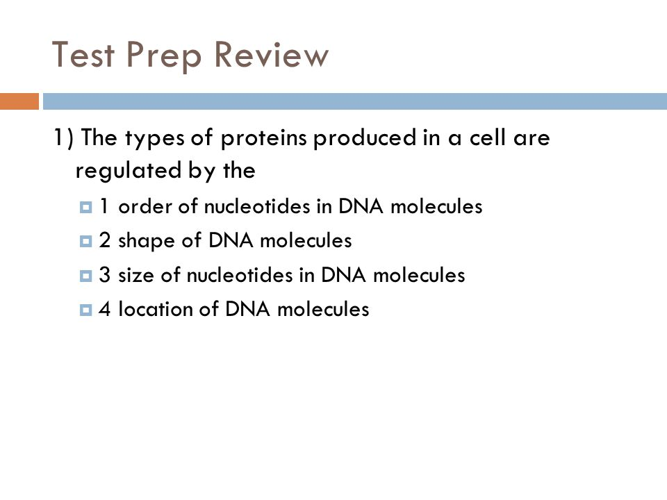 Test Prep Review 1) The types of proteins produced in a cell are regulated by the  1 order of nucleotides in DNA molecules  2 shape of DNA molecules  3 size of nucleotides in DNA molecules  4 location of DNA molecules