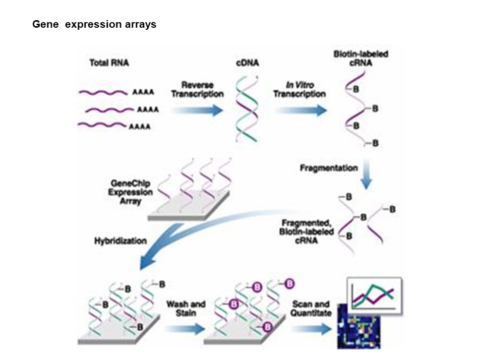 Gene expression arrays