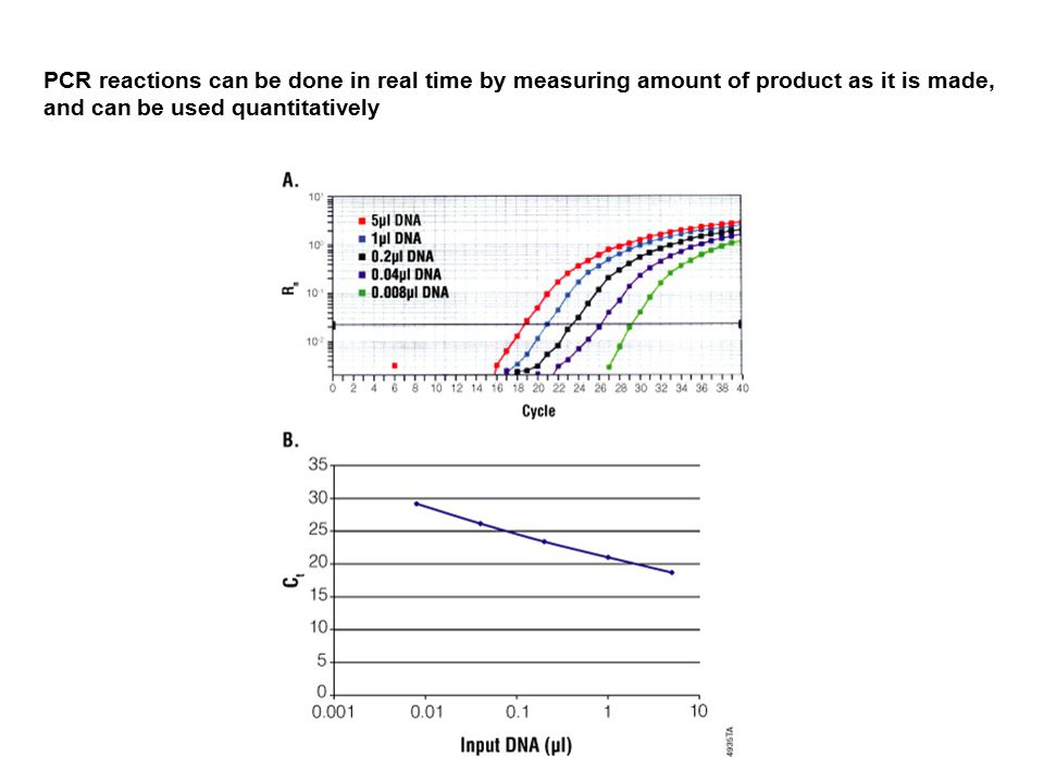 PCR reactions can be done in real time by measuring amount of product as it is made, and can be used quantitatively