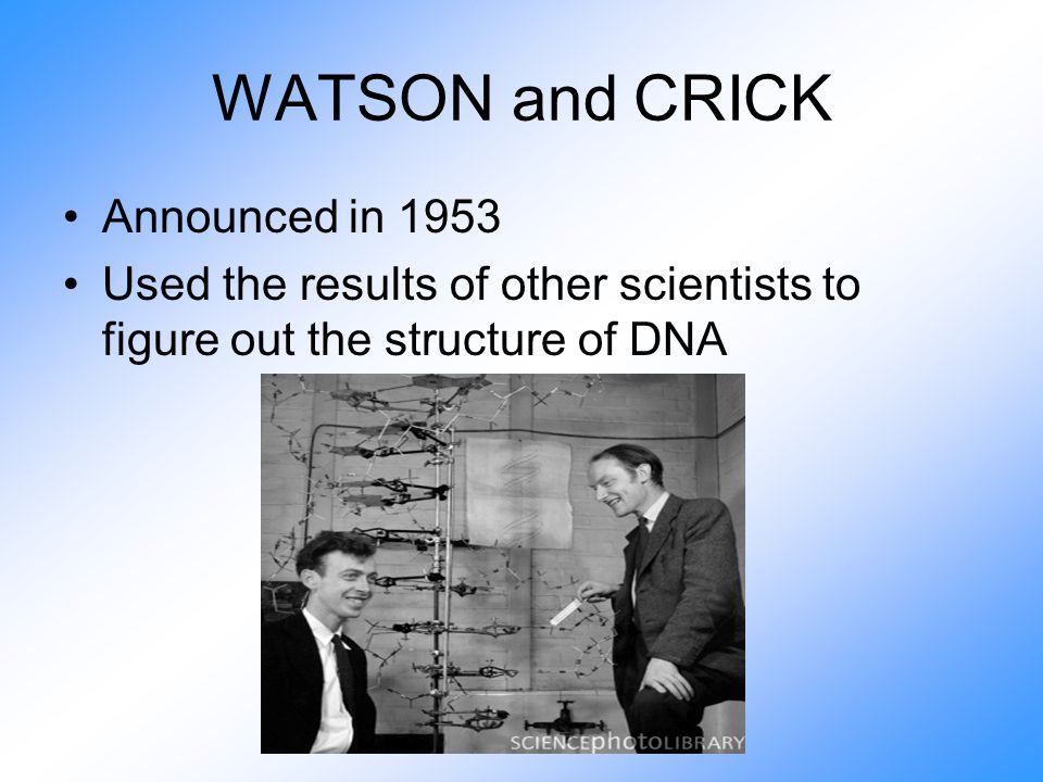 WATSON and CRICK Announced in 1953 Used the results of other scientists to figure out the structure of DNA
