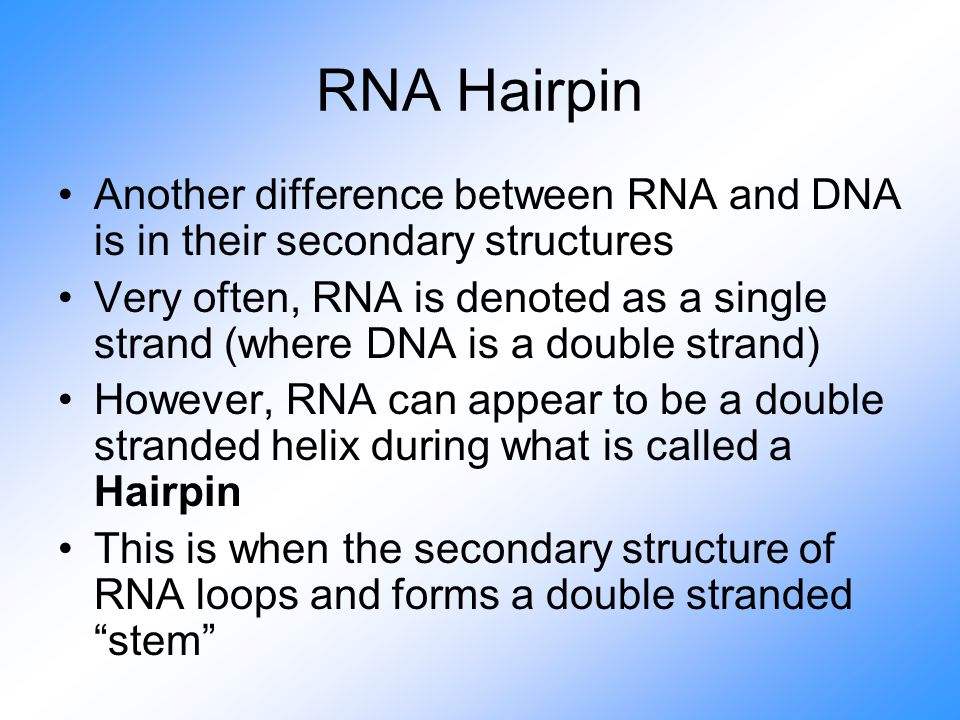 RNA Hairpin Another difference between RNA and DNA is in their secondary structures Very often, RNA is denoted as a single strand (where DNA is a double strand) However, RNA can appear to be a double stranded helix during what is called a Hairpin This is when the secondary structure of RNA loops and forms a double stranded stem