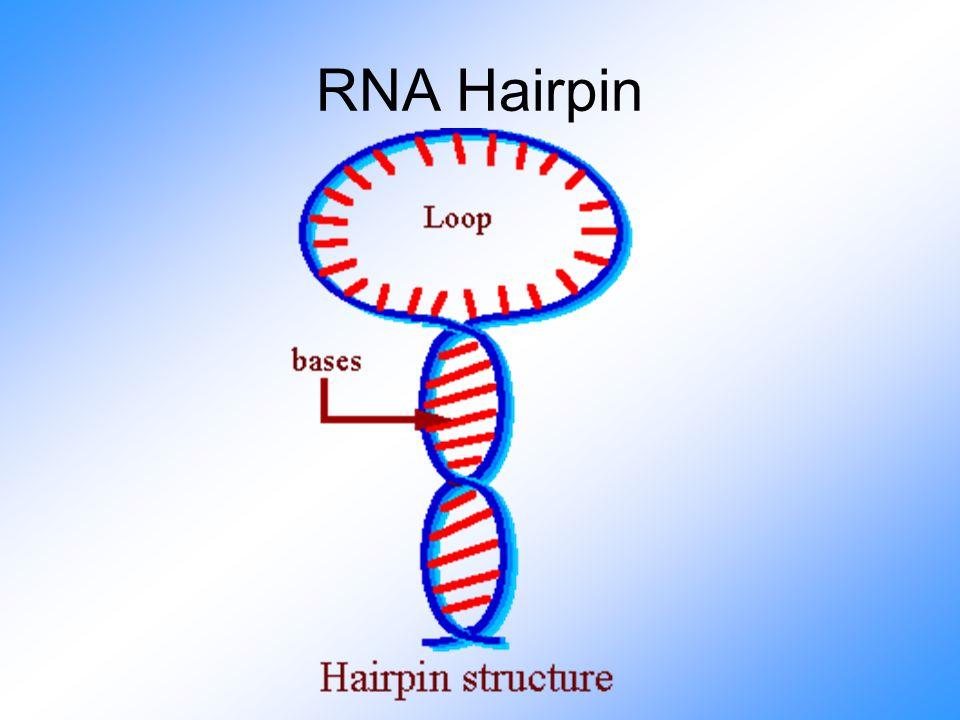 RNA Hairpin