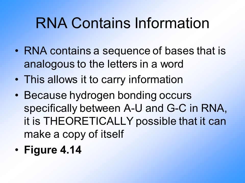 RNA Contains Information RNA contains a sequence of bases that is analogous to the letters in a word This allows it to carry information Because hydrogen bonding occurs specifically between A-U and G-C in RNA, it is THEORETICALLY possible that it can make a copy of itself Figure 4.14