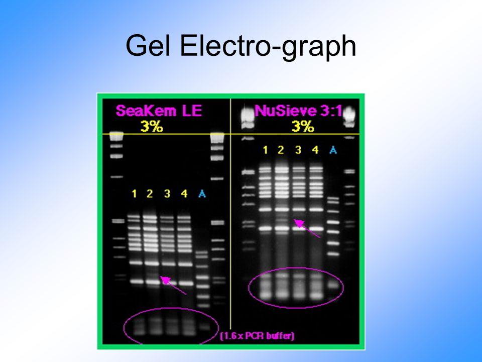 Gel Electro-graph