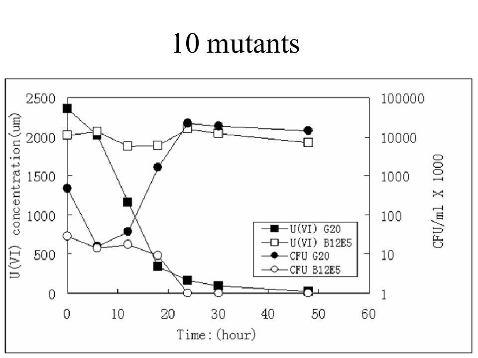 10 mutants