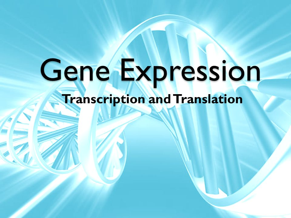 Gene Expression Transcription and Translation