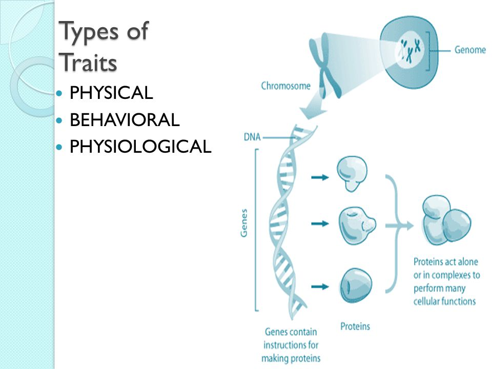 Types of Traits PHYSICAL BEHAVIORAL PHYSIOLOGICAL