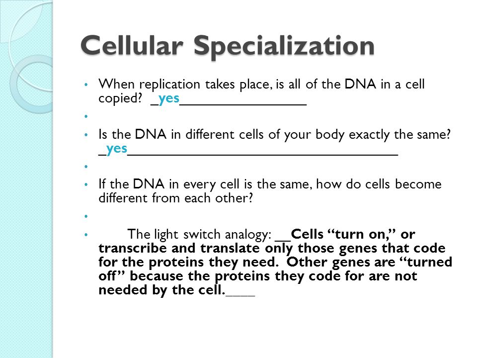 Cellular Specialization When replication takes place, is all of the DNA in a cell copied.
