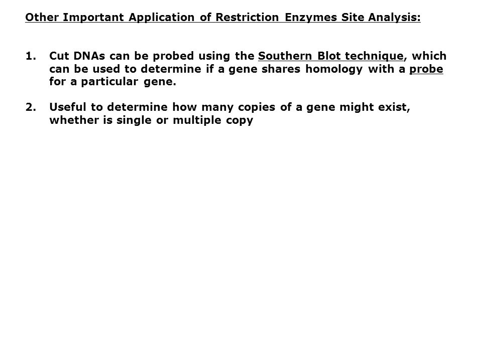 Other Important Application of Restriction Enzymes Site Analysis: 1.Cut DNAs can be probed using the Southern Blot technique, which can be used to determine if a gene shares homology with a probe for a particular gene.