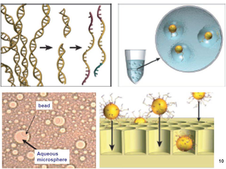 10 Aqueous microsphere bead