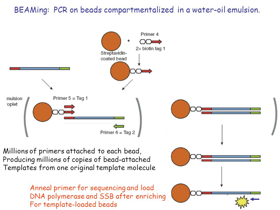 12 BEAMing: PCR on beads compartmentalized in a water-oil emulsion.