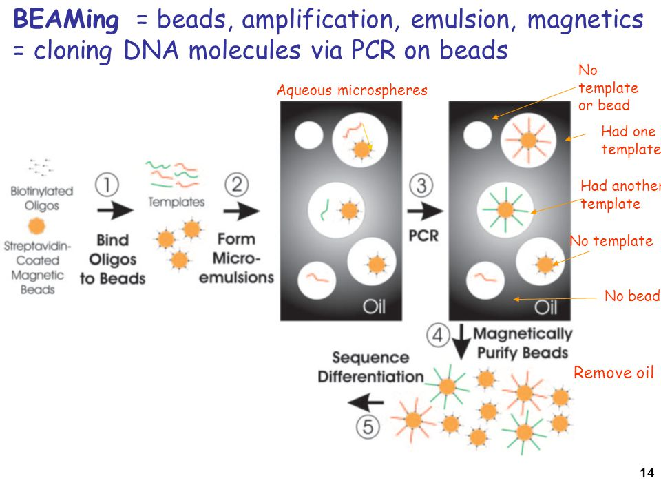 14 BEAMing = beads, amplification, emulsion, magnetics = cloning DNA molecules via PCR on beads No template No bead No template or bead Had one template Had another template Aqueous microspheres Remove oil