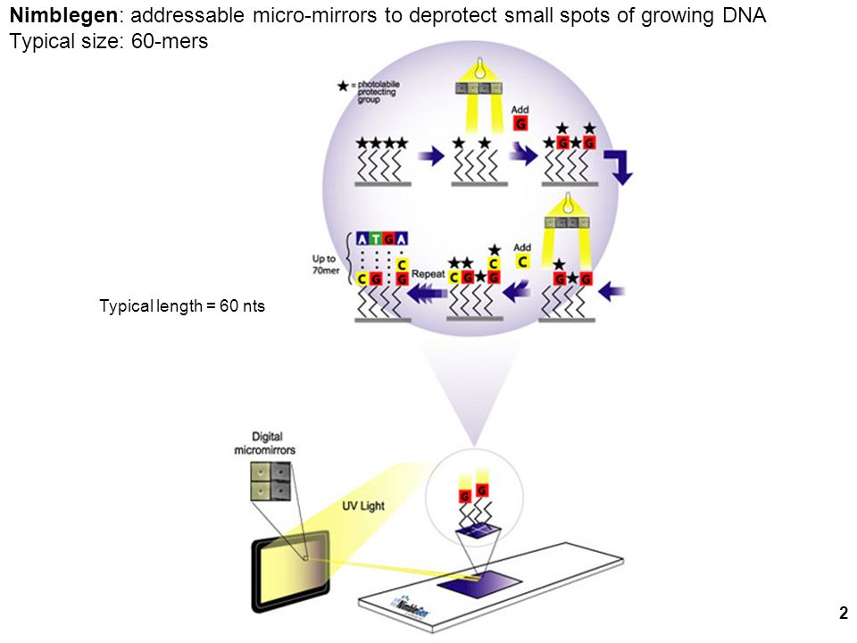 2 Nimblegen: addressable micro-mirrors to deprotect small spots of growing DNA Typical size: 60-mers Typical length = 60 nts