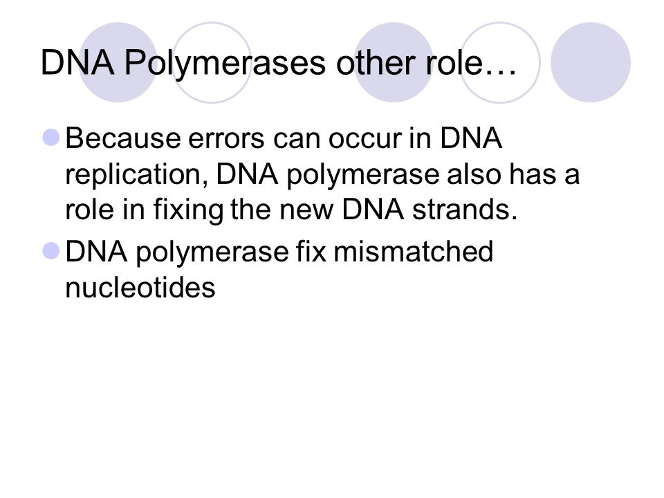 DNA Polymerases other role… Because errors can occur in DNA replication, DNA polymerase also has a role in fixing the new DNA strands. DNA polymerase
