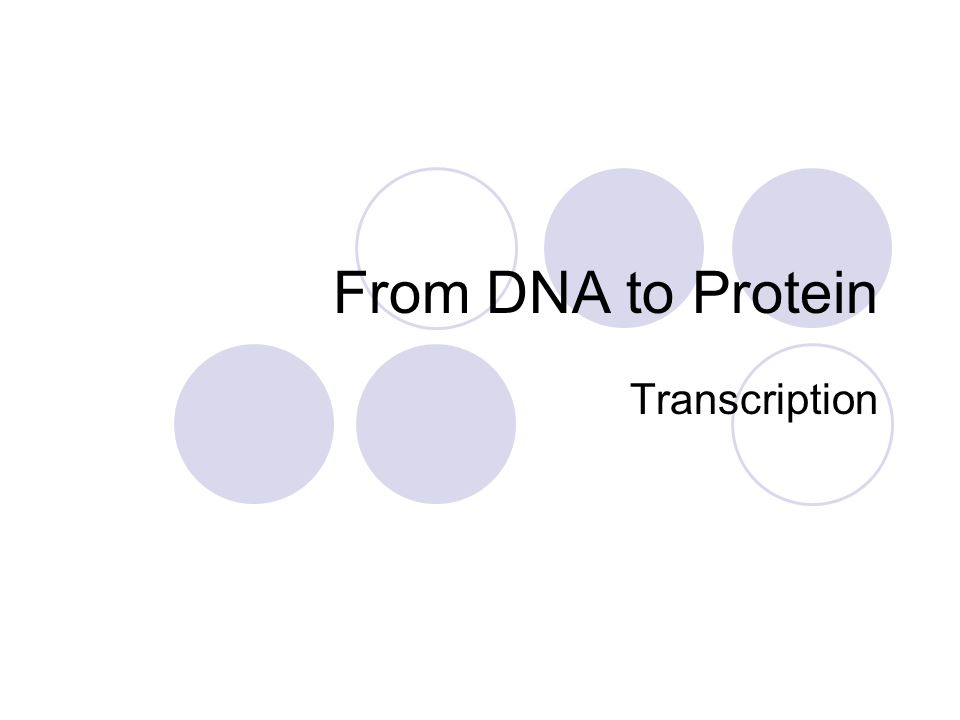 From DNA to Protein Transcription