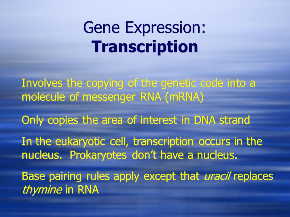 Gene Expression: Transcription Involves the copying of the genetic code into a molecule of messenger RNA (mRNA) Only copies the area of interest in DNA strand In the eukaryotic cell, transcription occurs in the nucleus.