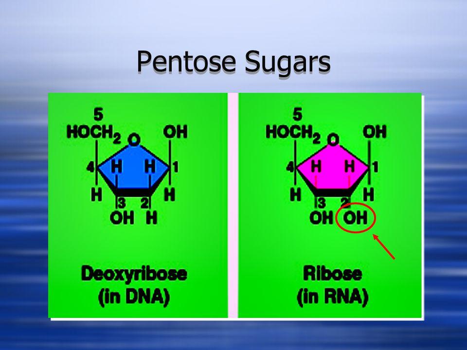 Pentose Sugars