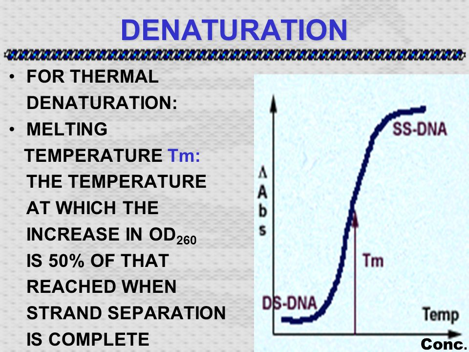 DENATURATION FOR THERMAL DENATURATION: MELTING TEMPERATURE Tm: THE TEMPERATURE AT WHICH THE INCREASE IN OD 260 IS 50% OF THAT REACHED WHEN STRAND SEPARATION IS COMPLETE Conc.