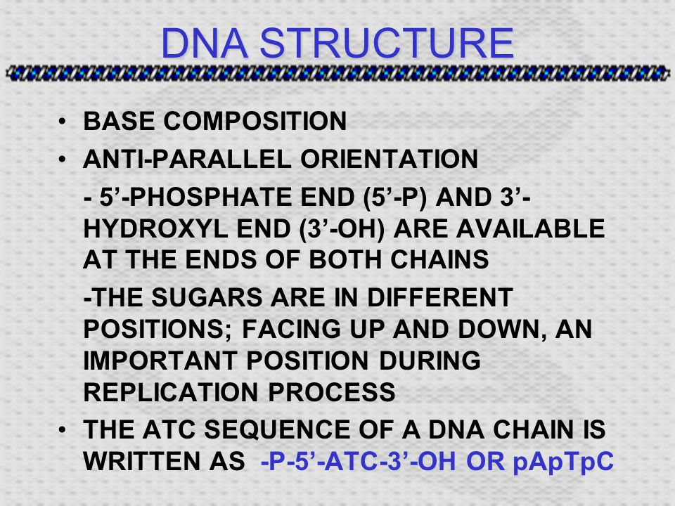 DNA STRUCTURE BASE COMPOSITION ANTI-PARALLEL ORIENTATION - 5'-PHOSPHATE END (5'-P) AND 3'- HYDROXYL END (3'-OH) ARE AVAILABLE AT THE ENDS OF BOTH CHAINS -THE SUGARS ARE IN DIFFERENT POSITIONS; FACING UP AND DOWN, AN IMPORTANT POSITION DURING REPLICATION PROCESS THE ATC SEQUENCE OF A DNA CHAIN IS WRITTEN AS-P-5'-ATC-3'-OH OR pApTpC