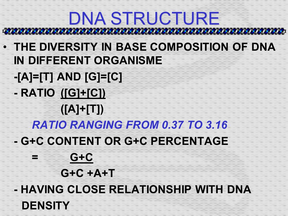 DNA STRUCTURE THE DIVERSITY IN BASE COMPOSITION OF DNA IN DIFFERENT ORGANISME -[A]=[T] AND [G]=[C] - RATIO([G]+[C]) ([A]+[T]) RATIO RANGING FROM 0.37 TO 3.16 - G+C CONTENT OR G+C PERCENTAGE = G+C G+C +A+T - HAVING CLOSE RELATIONSHIP WITH DNA DENSITY