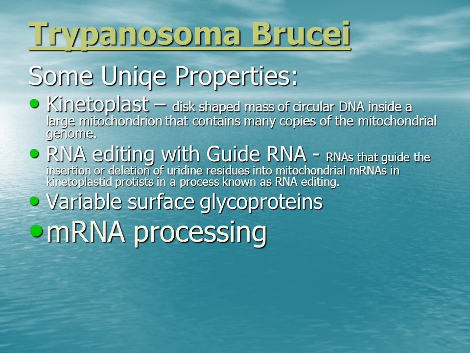 Trypanosoma Brucei Some Uniqe Properties: Kinetoplast – disk shaped mass of circular DNA inside a large mitochondrion that contains many copies of the mitochondrial genome.