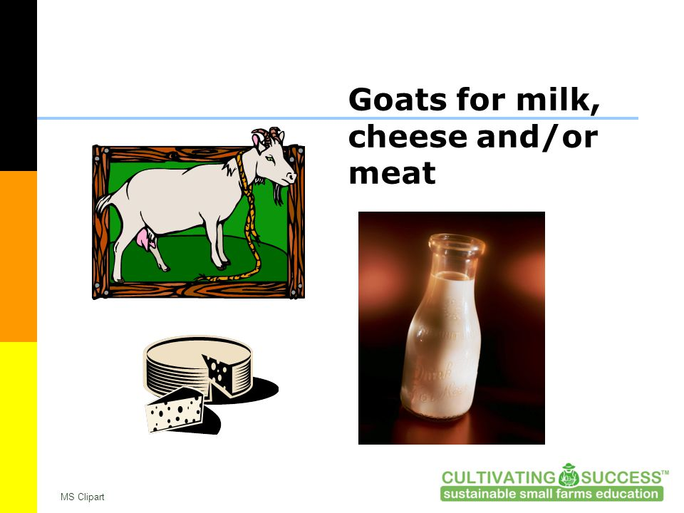 Goats for milk, cheese and/or meat MS Clipart