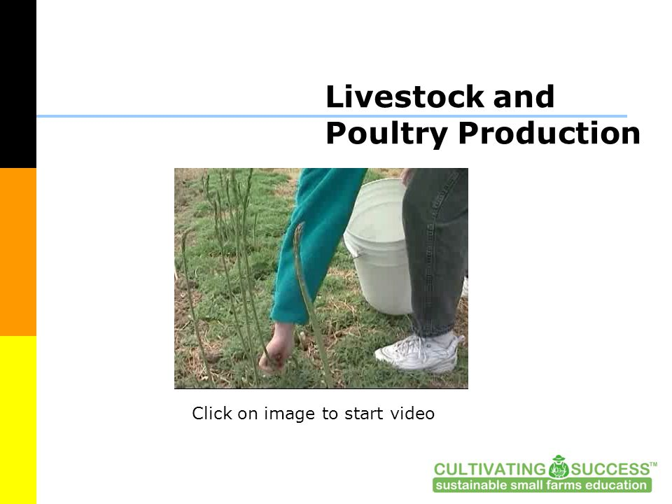Livestock and Poultry Production Click on image to start video
