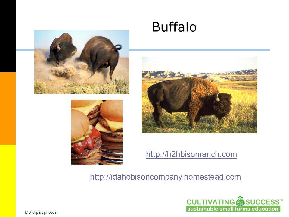 Buffalo http://h2hbisonranch.com http://idahobisoncompany.homestead.com MS clipart photos