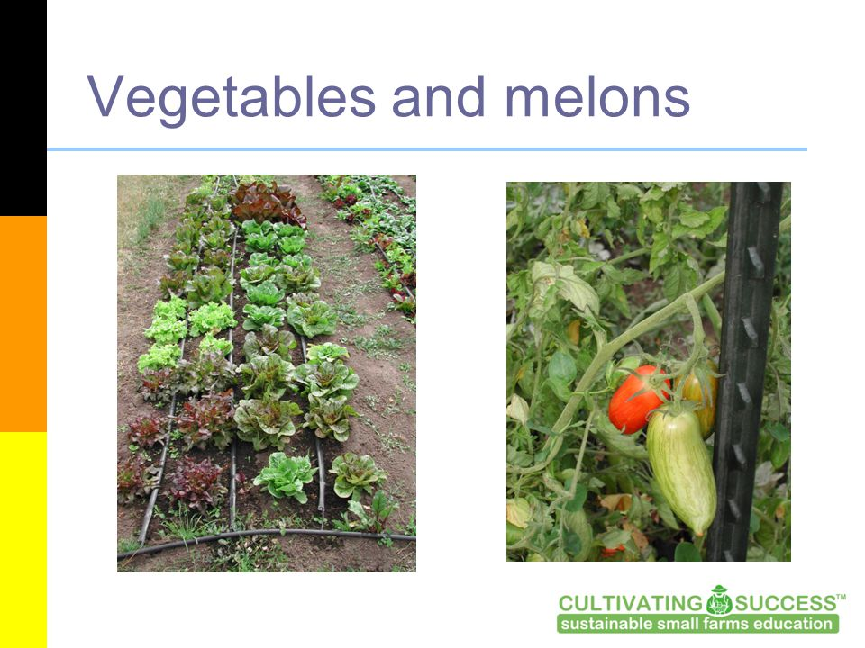 Vegetables and melons