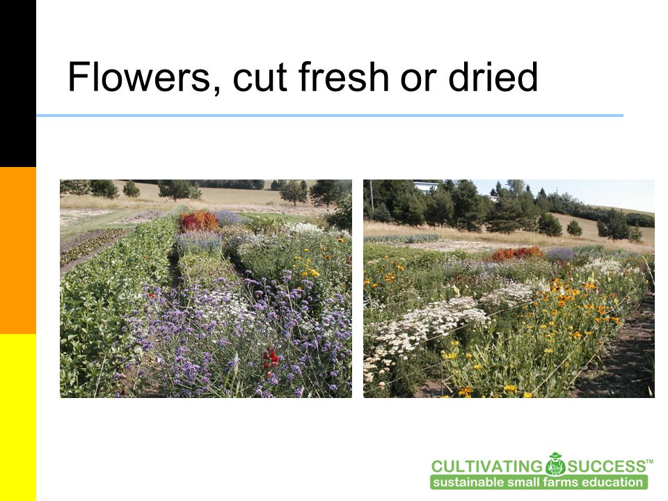 Flowers, cut fresh or dried
