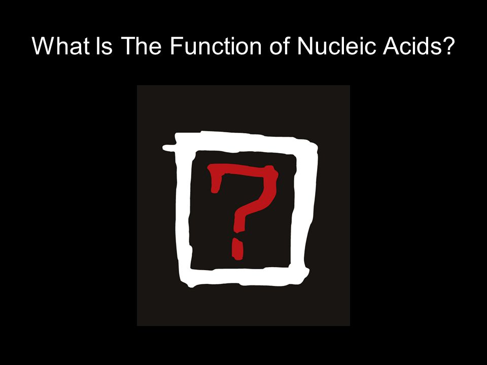 What Is The Function of Nucleic Acids